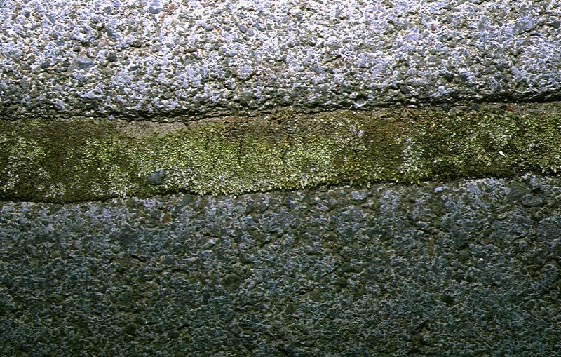 Mynd af Silfurhnokki (Bryum argenteum)