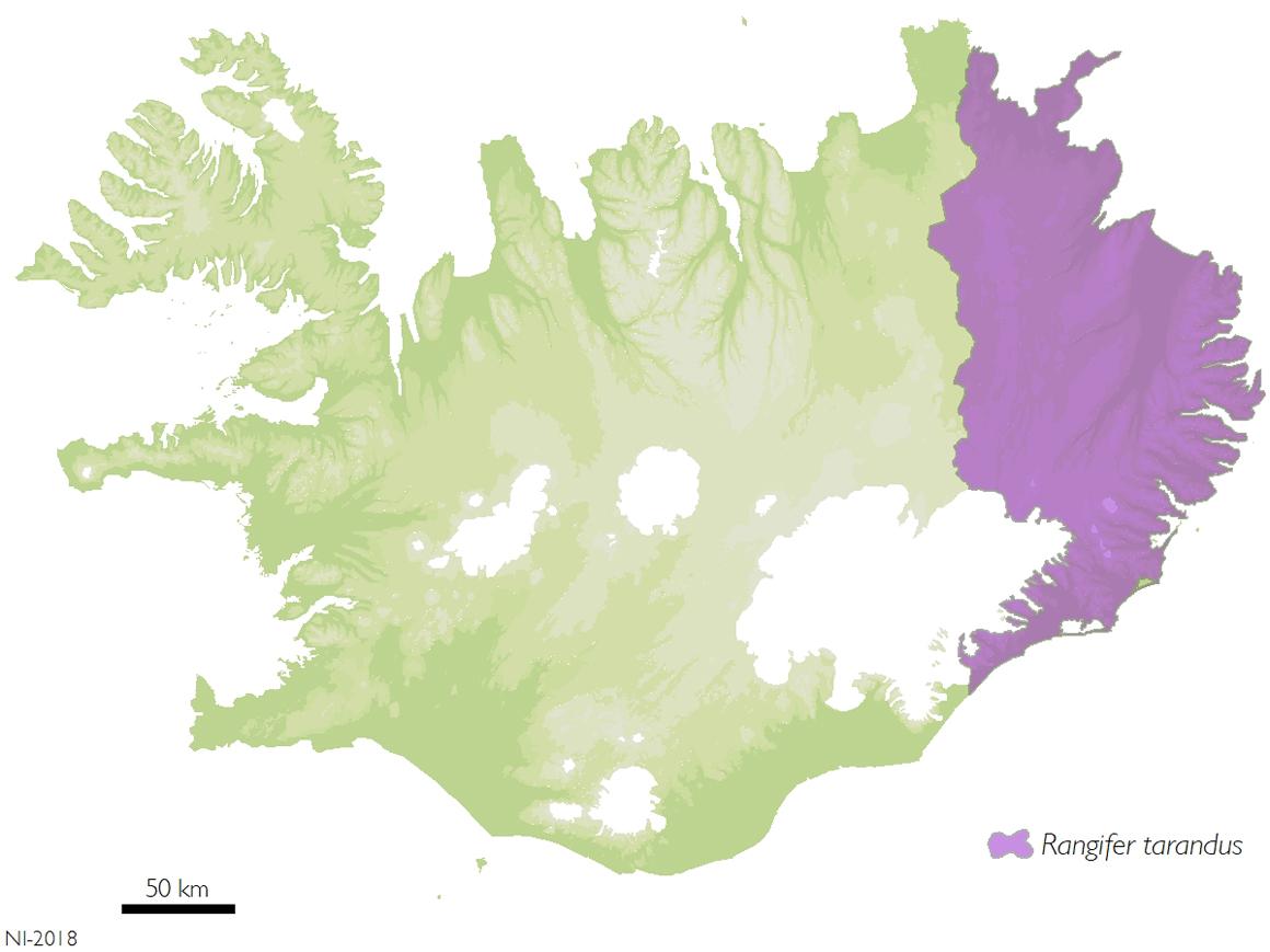 Heimkynni hreindýra eru á austanverðu landinu