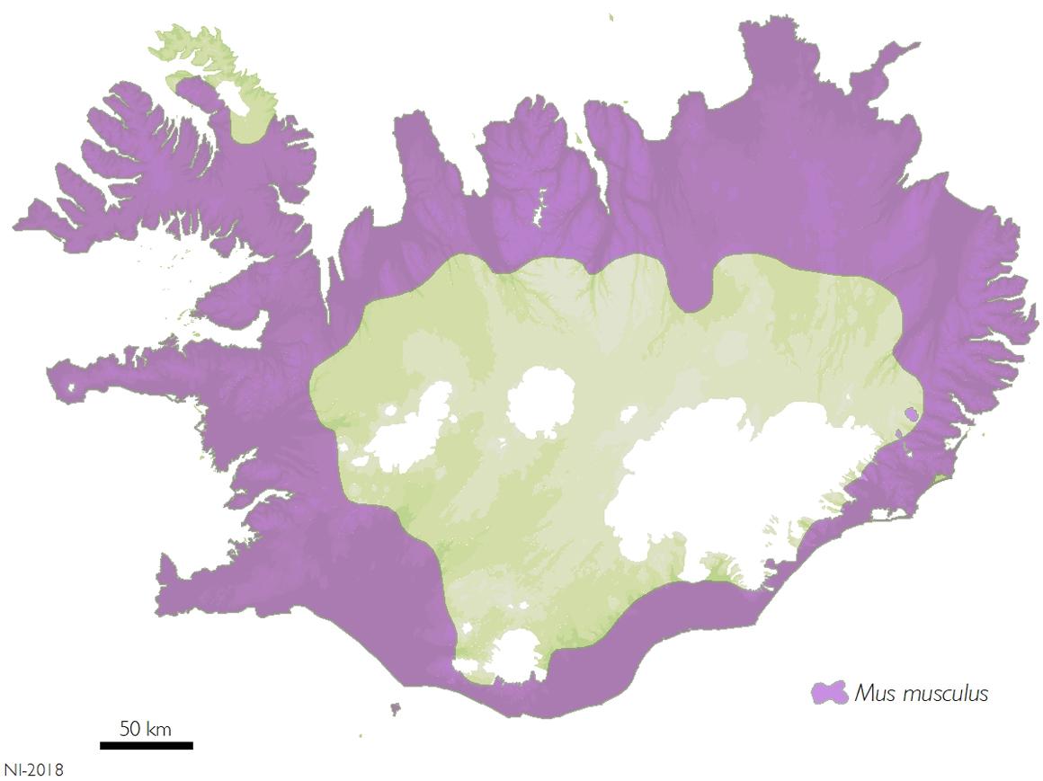 Tilgátukort af útbreiðslu húsamúsar á Íslandi